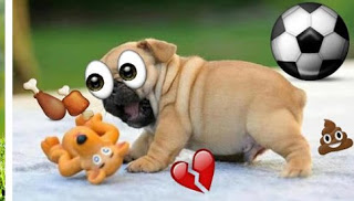 Emoji Photo Sticker